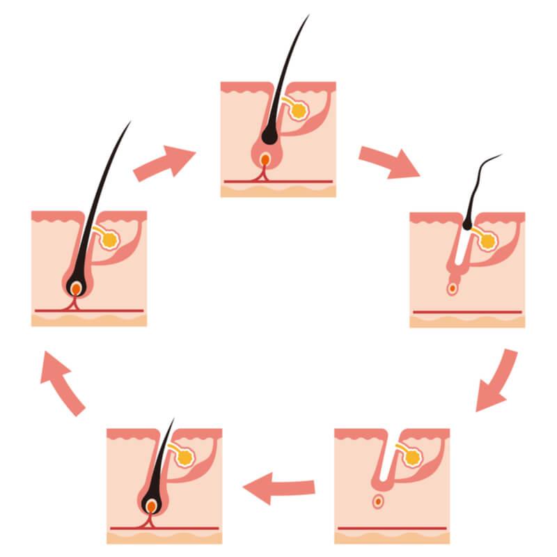 postpartum hair loss cycle